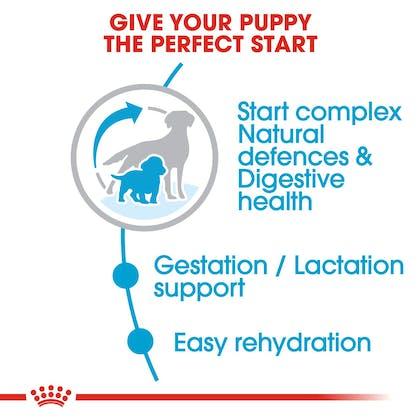 SHN-PuppyMediumStarter-CV-EretailKit-2