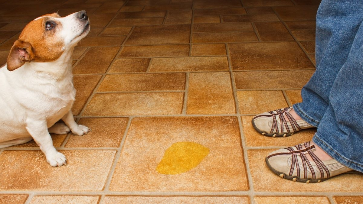 Quale approccio... Incontinenza urinaria canina