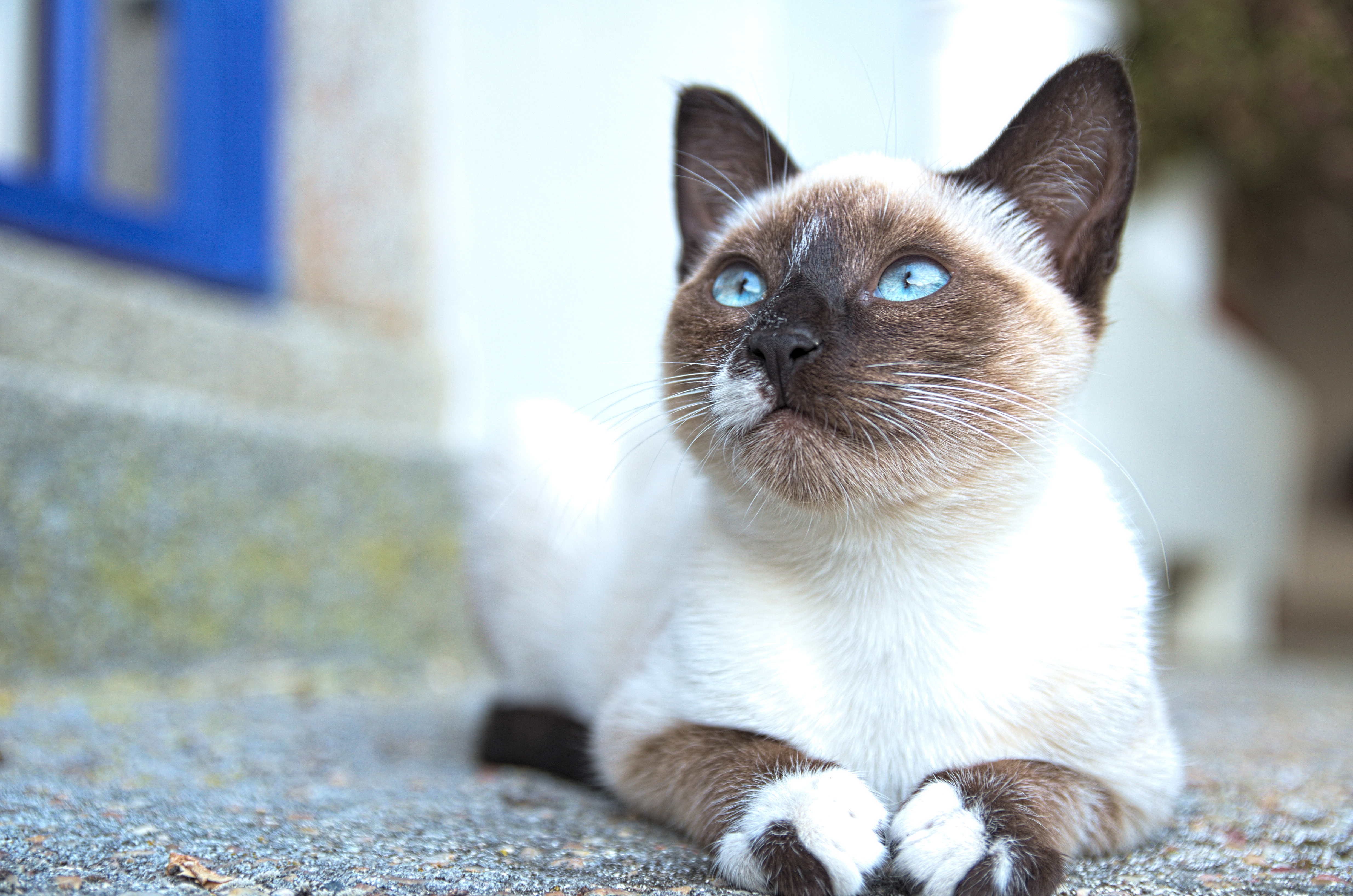 What causes bad breath in cats - Royal Canin