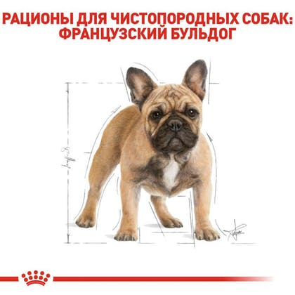 RC-BHN-FrenchBulldog_2-RU.jpg