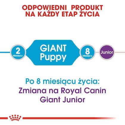 RC-SHN-Puppy-Giant-CV1_015_POLAND-POLISH