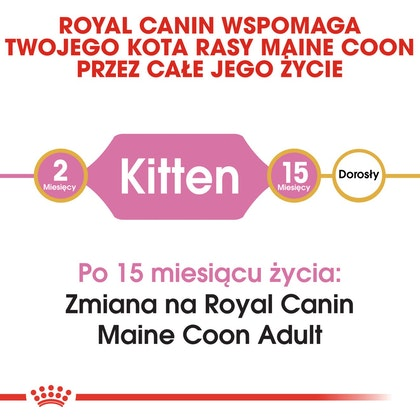 RC-FBN-KittenMaineCoon-CV1_002_POLAND-POLISH