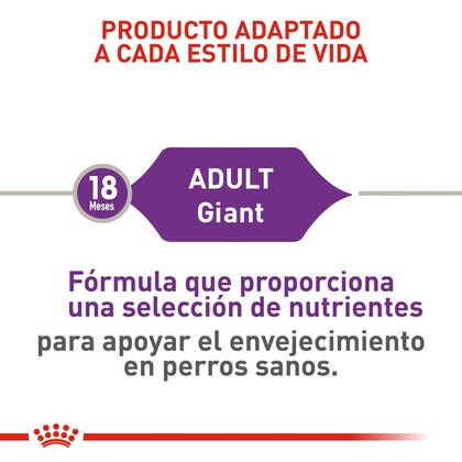 GIANT ADULT COLOMBIA 3