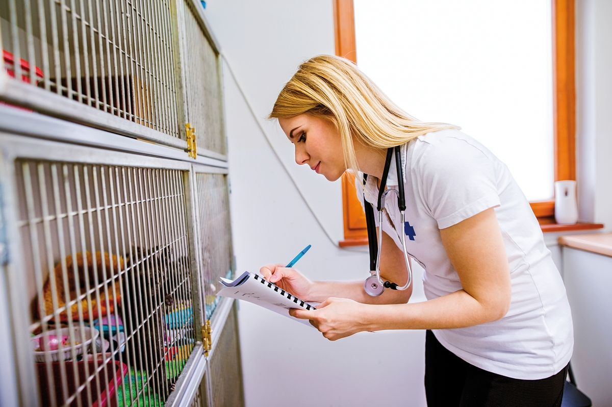 If a kitten needs to be hospitalized, it is important to make the stay as pleasant as possible, and will help the cat be more amenable to future stays.