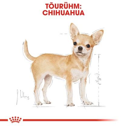 RC-BHN-Wet-Chihuahua-CV-Eretailkit-1-et_EE