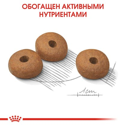 RC-CCN-LightMini-CV-Eretailkit-5_rus