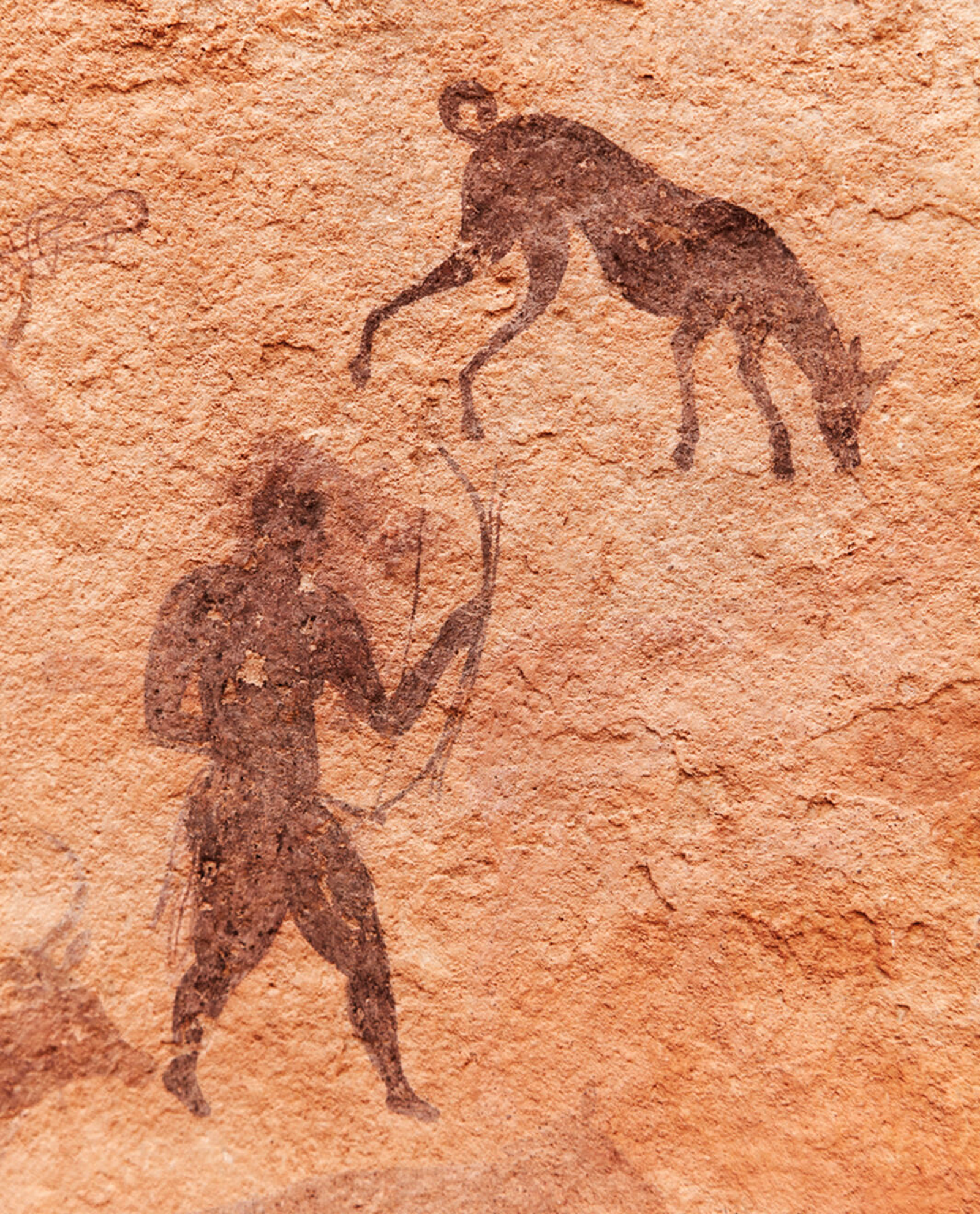 Figure 2. A 7,000-year-old rock painting from Tassili N'Ajjer, Algeria, depicting humans hunting with dogs that show physical traits that differentiate them from wolves and other wild canids.