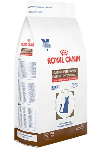 Gastrointestinal-Feline-2