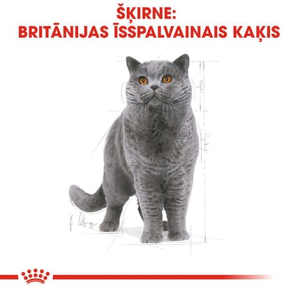 RC_FBN_BritishSH_CV_Eretailkit_lv_LV (1)