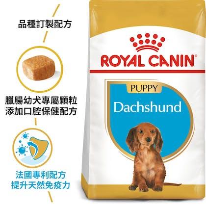 BHN_PuppyDachshund