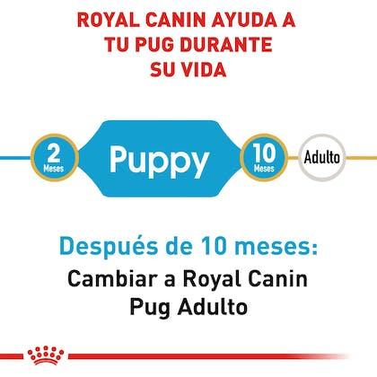 RC-BHN-PuppyPug-CM-EretailKit-1