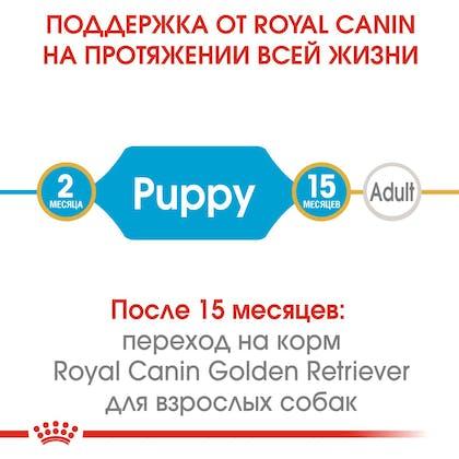 HI_BHN_GOLDEN RETRIEVER_PUPPY_ru_1