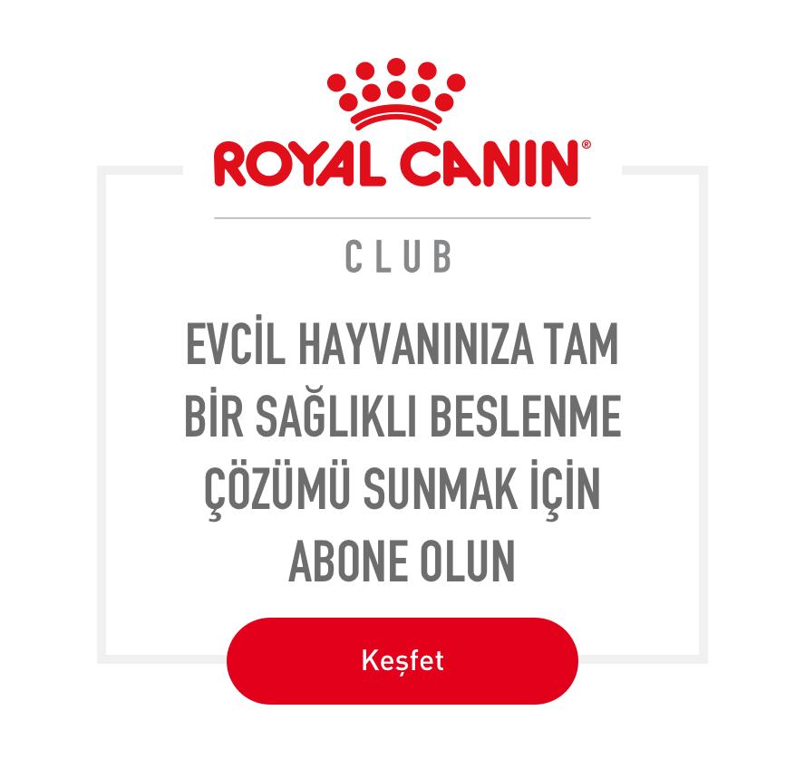 Royal Canin CLUB