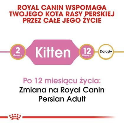 RC-FBN-KittenPersian-CV1_000_POLAND-POLISH