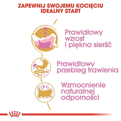 RC-FBN-KittenPersian-CV2-cat_000_POLAND-POLISH