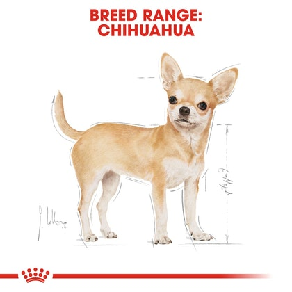 BHN-Wet-Chihuahua-CV-Eretailkit-1