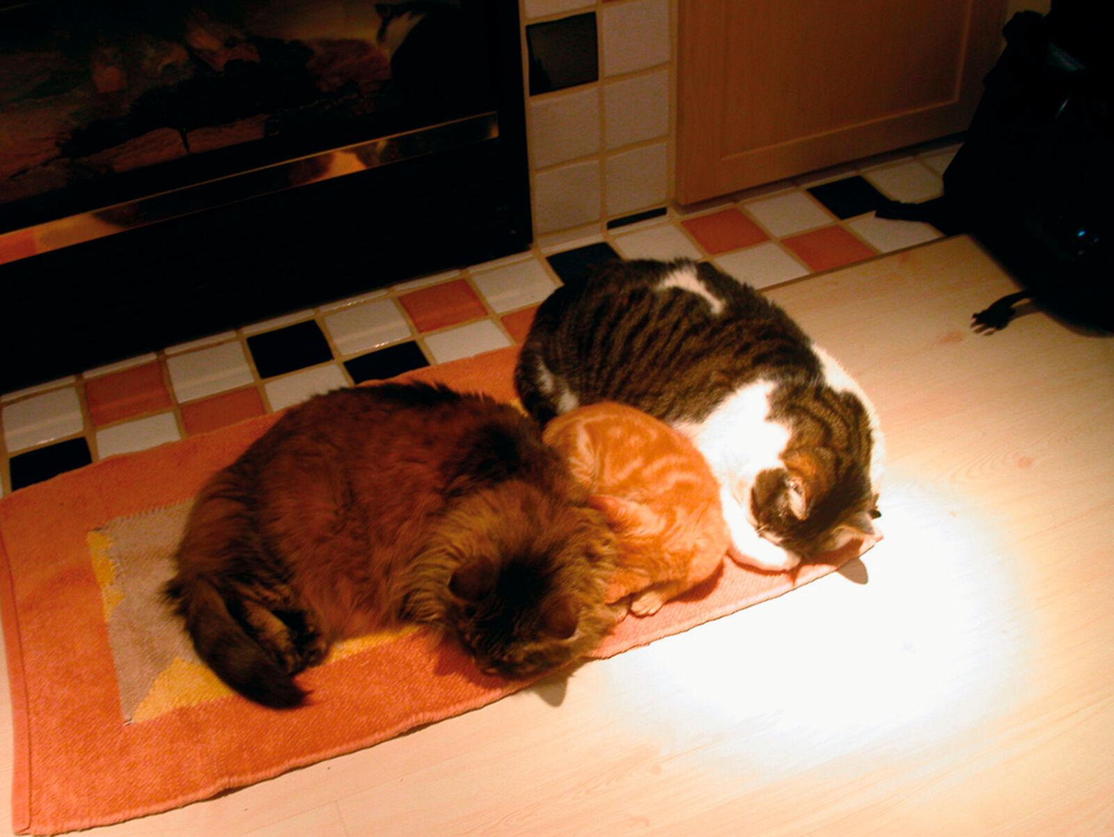 Figura 2. Se sono stati ben socializzati da gattini, e c'è spazio sufficiente con un numero adeguato di risorse separate, i gatti possono convivere felicemente.