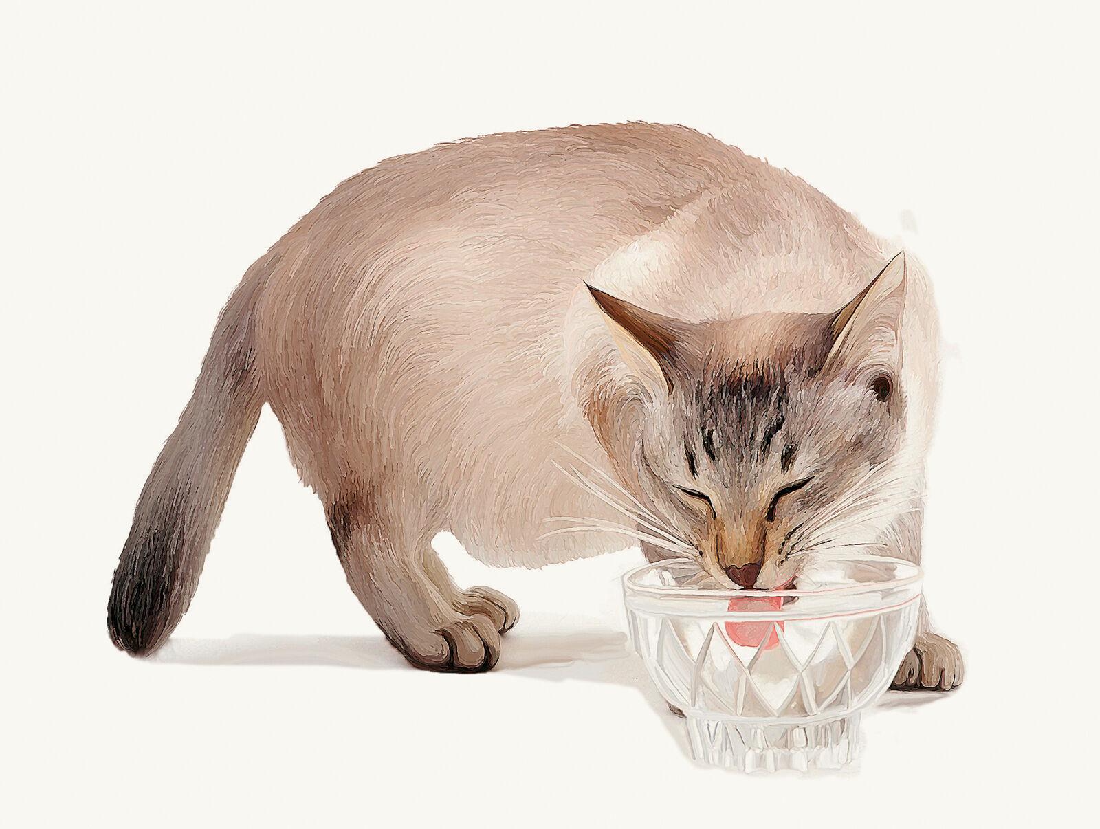 Figure 5a. Dans l'environnement sécurisé du foyer, les vibrisses du chat peuvent toucher sans problème le bord des gamelles d'eau ou de nourriture.