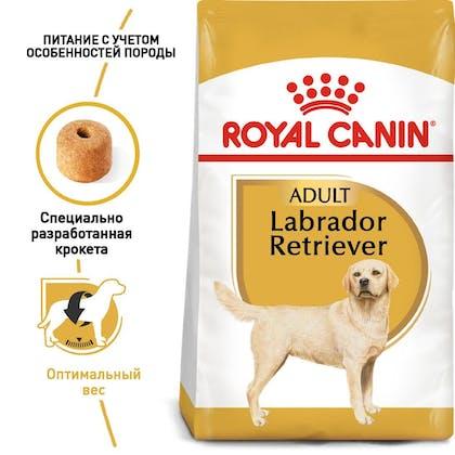 RC-BHN-Labrador_1-RU.jpg