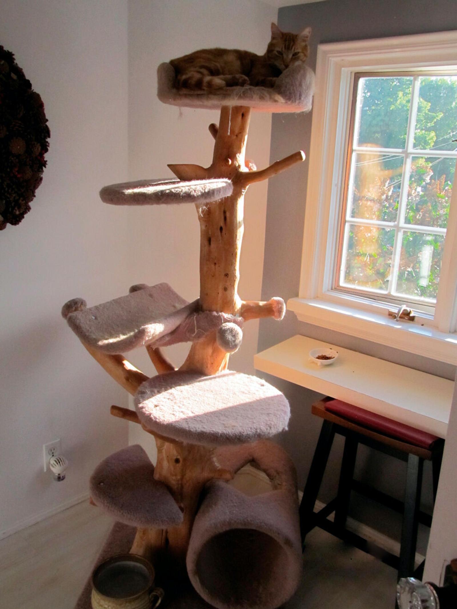 Figura 6. La estimulación visual es importante para el gato. Al menos una de las áreas de descanso (p.ej., una plataforma elevada) debe proporcionar al gato vista al exterior.