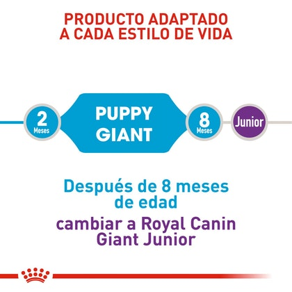 GIANT PUPPY COLOMBIA 3