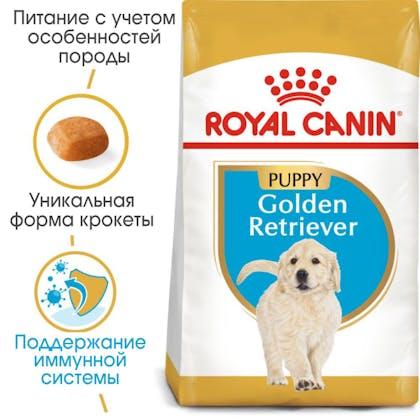 HI_BHN_GOLDEN RETRIEVER_PUPPY_ru_4