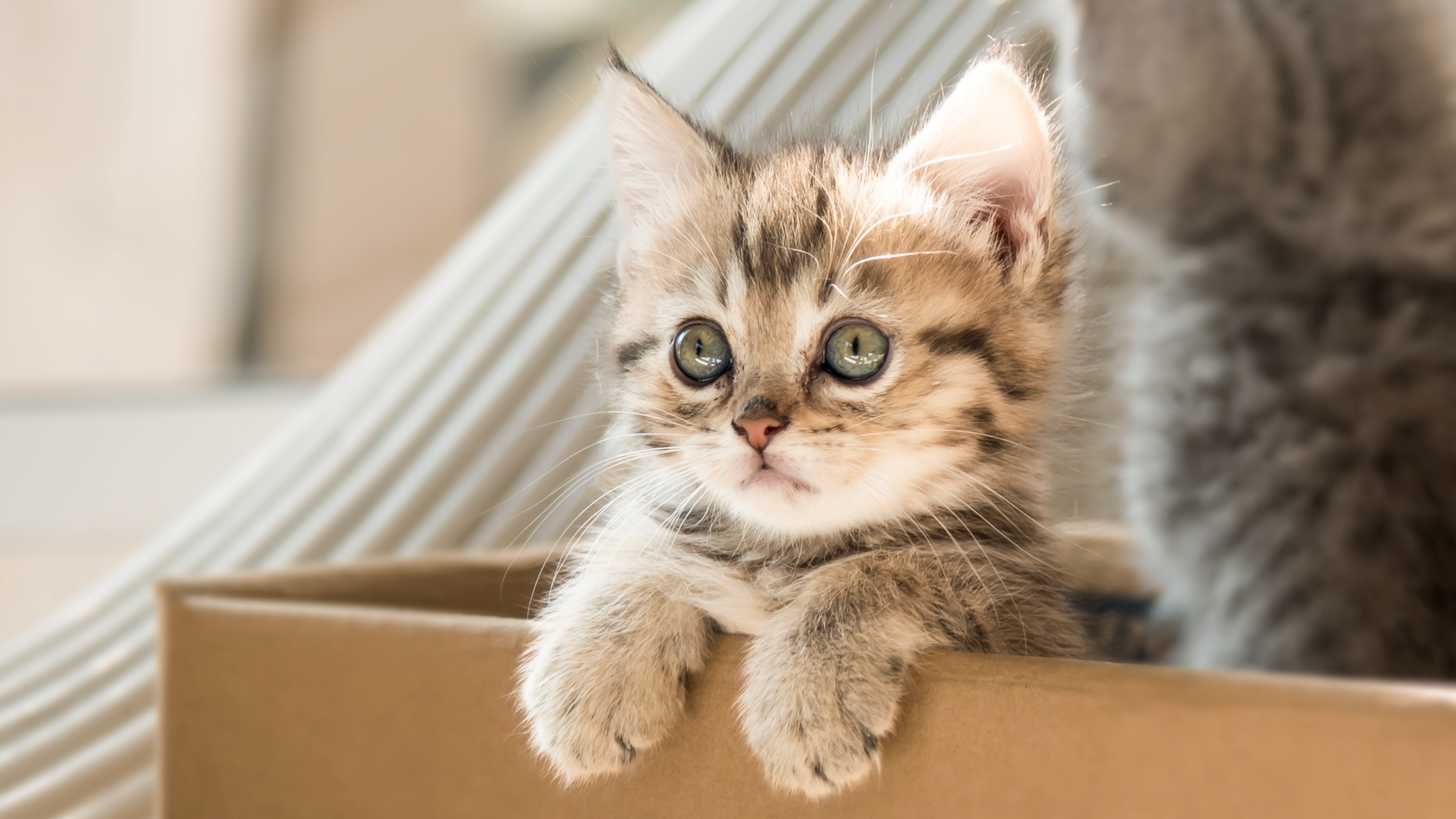 Two kittens sitting in a cardboard box