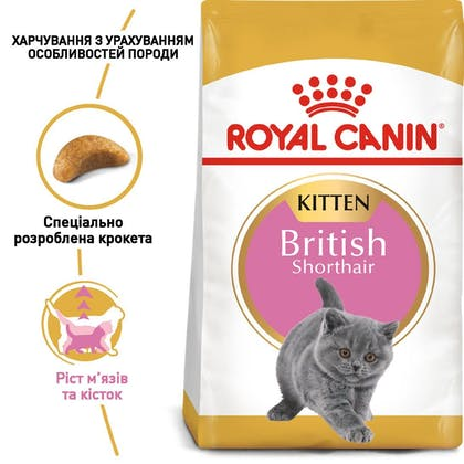 RC-FBN-KittenBritishShorthair_1-UA.jpg