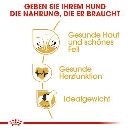 RC-BHN-GoldenRetriever-Trockennahrung_Vorteile_DE