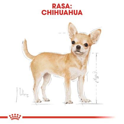 RC-BHN-Chihuahua-CV-Eretailkit-1-pl_PL