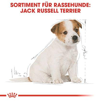 RC-BHN-Puppy_Jack-Russell_Trockennahrung_DE