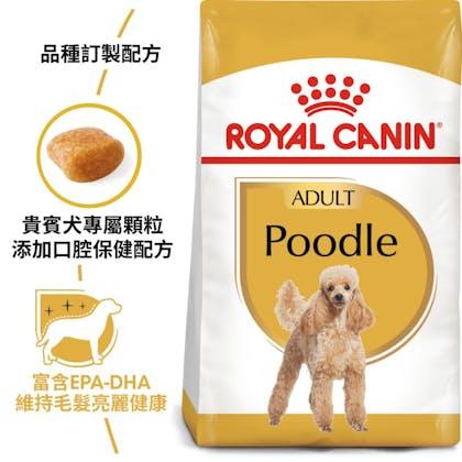 BHN_Poodle