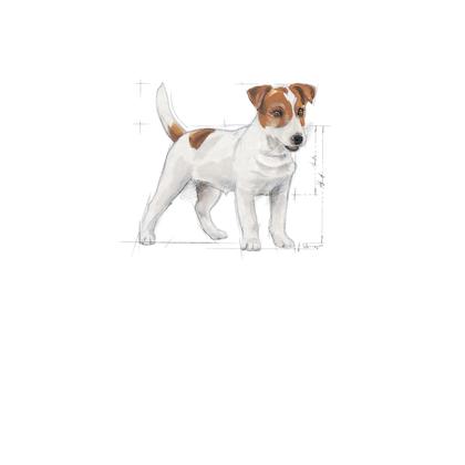 X-SMALL & MINI - Pack illustrations - MI-AD-SHN-ILLUSTR-FB