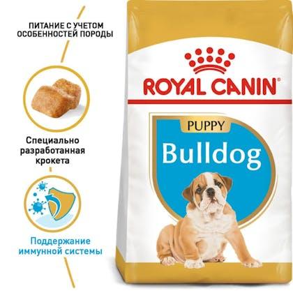 RC-BHN-PuppyBulldog_1-RU.jpg