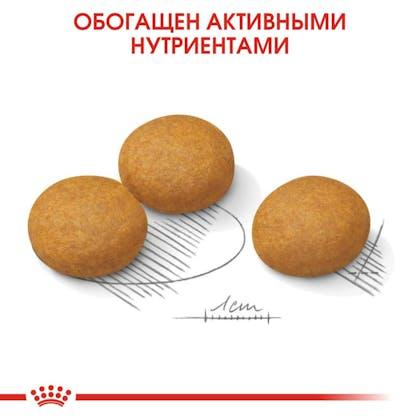 RC-CCN-DermaMax-CV-Eretailkit-5_rus