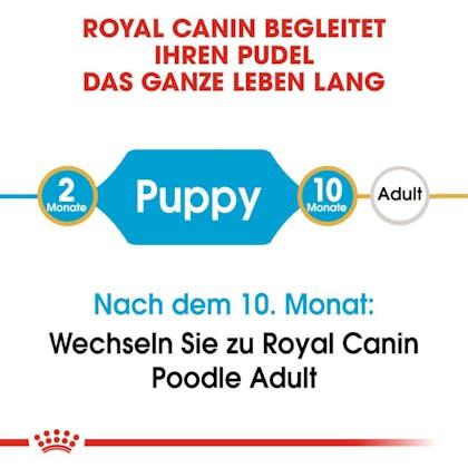 RC-BHN-Puppy_Poodle-Trockennahrung_2-Monate_DE