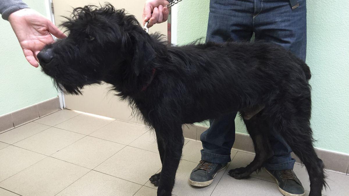 Insufficienza pancreatica esocrina nel cane