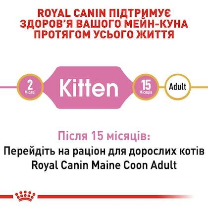 RC-FBN-KittenMaineCoon_2-UA.jpg