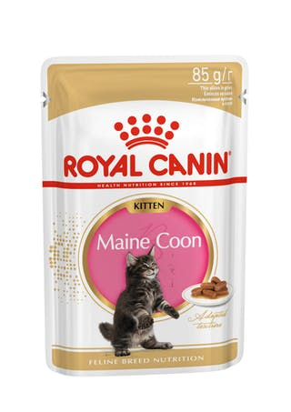 Maine Coon Kitten (в соусе)