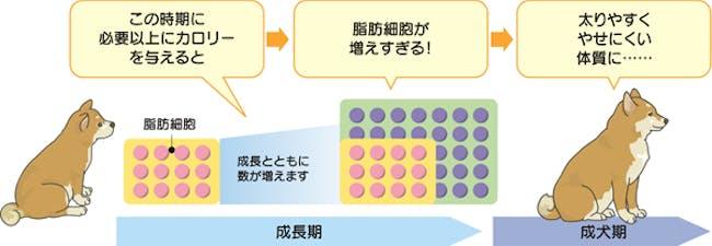 56_Japan_local_FAQ_Calorie.jpg