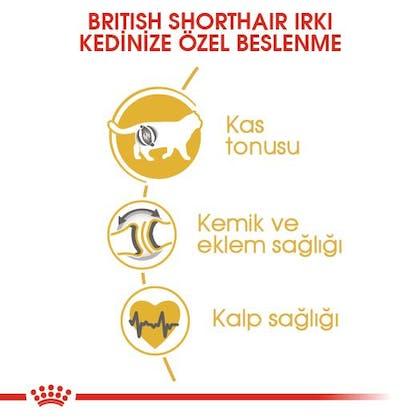 Royal Canin British Shorthair Adult Kedi Maması 3
