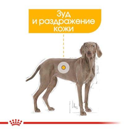 RC-CCN-DermaMax-CV-Eretailkit-2_rus