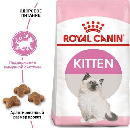 RC-FHN-Kitten_1-RU.jpg