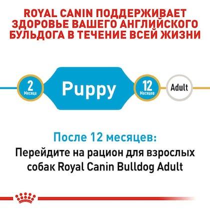 RC-BHN-PuppyBulldog_2-RU.jpg