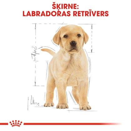 RC-BHN-PuppyLabradorRetriever-CM-EretailKit-4-lv_LV