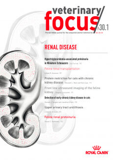 Renal Diseases