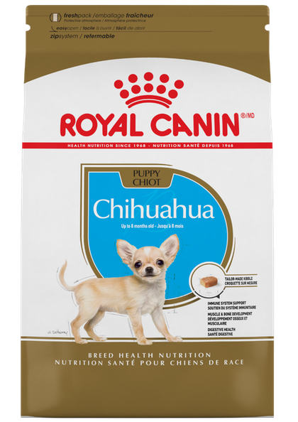 Chihuahua_Puppy_1