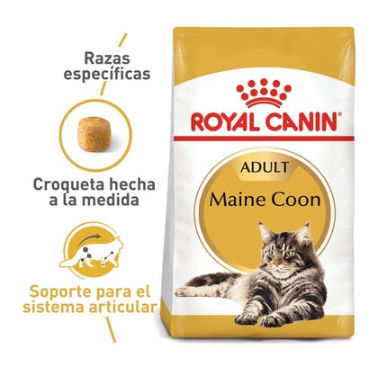 MAINE COON ADULT COLOMBIA 1