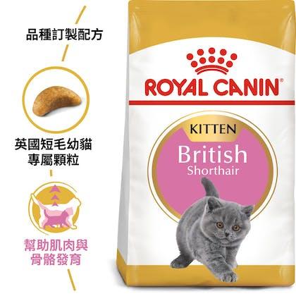 英國短毛幼貓BSK38_EC產品圖