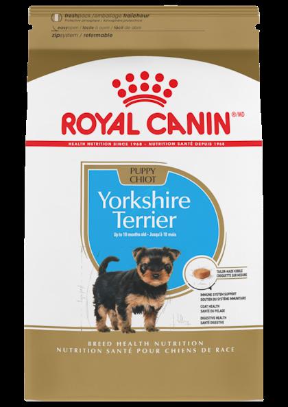 Yorkshire_Terrier_Puppy_1